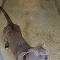 Adopt A Pet :: Duke - Bishop, GA
