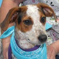 Adopt A Pet :: Lillith - Robinson, IL