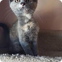 Adopt A Pet :: Nebula - Hazel Park, MI