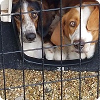 Adopt A Pet :: Momz and Molly Ann - Folsom, LA