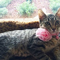 Adopt A Pet :: Fawn - Metairie, LA
