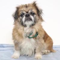 Adopt A Pet :: Bonny - Austin, TX