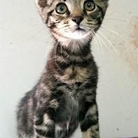 Adopt A Pet :: Reno - Knoxville, TN