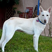 Adopt A Pet :: Lexi - Mira Loma, CA