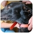 Photo 2 - Greyhound Dog for adoption in Windsor Heights, West Virginia - Rocky