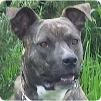 Adopt A Pet :: Kulani - Bakersfield, CA
