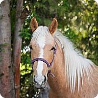 Adopt A Pet :: Faith - Gresham, OR