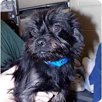Adopt A Pet :: Frisbee - Georgetown, KY
