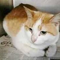 Adopt A Pet :: binx - Prestonsburg, KY