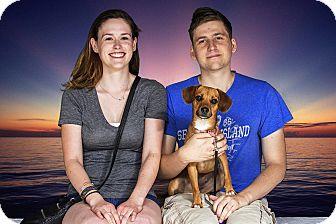 Beagle/Dachshund Mix Dog for adoption in Livonia, Michigan - Chika - Adopted 07/25/2015