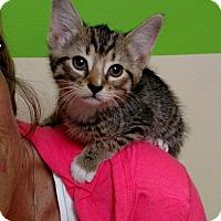 Adopt A Pet :: Bryce - Fredericksburg, VA