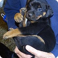 Adopt A Pet :: *Frankie - PENDING - Westport, CT