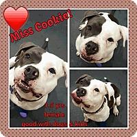 Adopt A Pet :: Cookie - Sacramento, CA