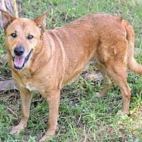 Adopt A Pet :: Buttons - Alvarado, TX