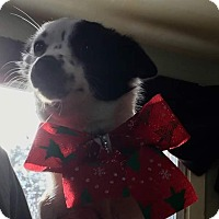 Adopt A Pet :: Pixel - South Dennis, MA