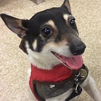 Adopt A Pet :: Zorro MH - Columbia, TN