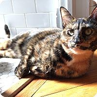 Adopt A Pet :: Mamba - Chicago, IL