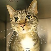 Adopt A Pet :: Tenmah - Camden, DE