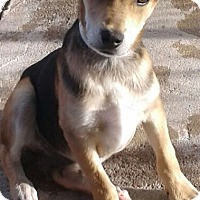 Adopt A Pet :: Perry - Tucson, AZ
