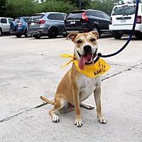 Adopt A Pet :: Rudy - Tomball, TX
