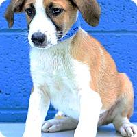 Adopt A Pet :: Isiah - Waldorf, MD