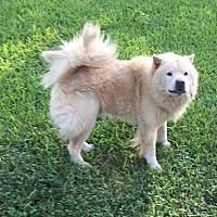 Adopt A Pet :: Chanda - Weatherford, TX