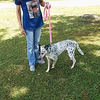 Adopt A Pet :: Jasmine - Wilmington, DE