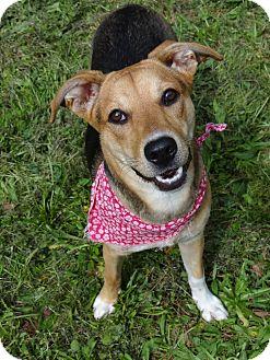 Hound (Unknown Type) Mix Dog for adoption in Peachtree City, Georgia - Jemma