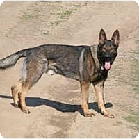 Adopt A Pet :: Fabio - Longmont, CO