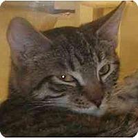 Adopt A Pet :: Sweetie - Jenkintown, PA
