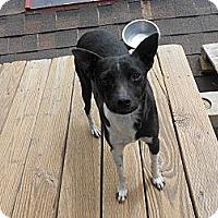 Adopt A Pet :: Tracee - San Diego, CA