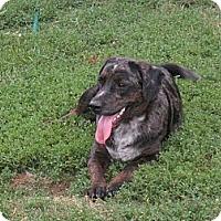 Adopt A Pet :: TISHA-JJ - Roundup, MT