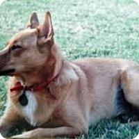 Adopt A Pet :: Coco - Austin, TX