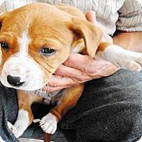 Adopt A Pet :: China - San Diego, CA