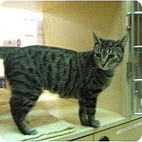 Adopt A Pet :: Clarice - Jenkintown, PA