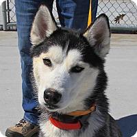 Adopt A Pet :: Nadia - Horsham, PA