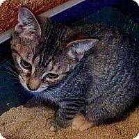Adopt A Pet :: Audrey - McDonough, GA