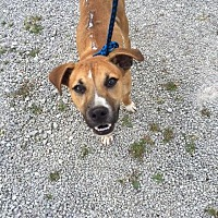 Adopt A Pet :: Chance - Morehead, KY