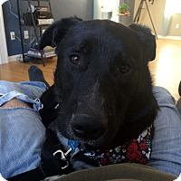 Adopt A Pet :: Hank - in Maine - kennebunkport, ME