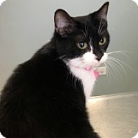 Adopt A Pet :: Briah - McHenry, IL