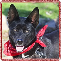 Adopt A Pet :: Sophia beauty, smart gal - Sacramento, CA
