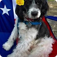 Adopt A Pet :: Annie - Sugarland, TX