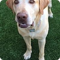 Adopt A Pet :: Buddy Bob - Torrance, CA