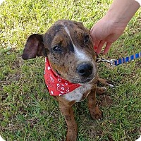 Adopt A Pet :: Hunter - Wichita Falls, TX