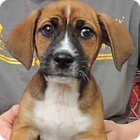 Adopt A Pet :: Jace - Joplin, MO