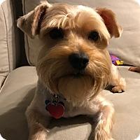 Adopt A Pet :: Leo - Thousand Oaks, CA