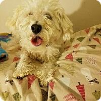Adopt A Pet :: Ponce - Lodi, CA