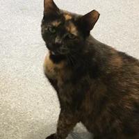 Adopt A Pet :: Princess - Randleman, NC