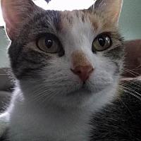 Adopt A Pet :: Bunny - South Saint Paul, MN