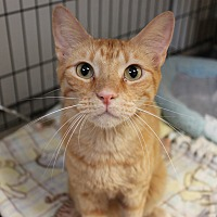 Adopt A Pet :: Campbell - Naperville, IL